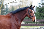 Cynamon (Lord - Harwest - Cervantes)