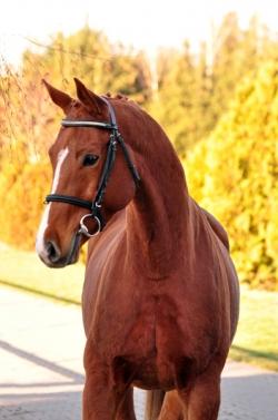 Centaur (Saganek - Elpar xx - Arianin)